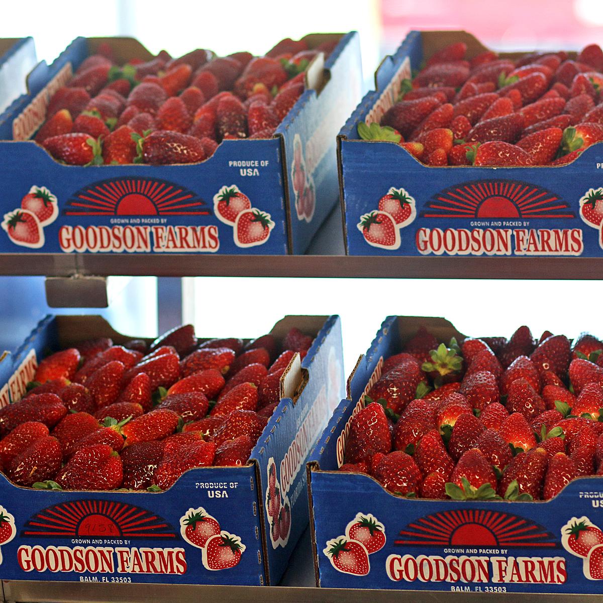 Fresh Florida Strawberries